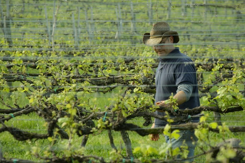 field man barboursville vine wine farm hat vineyard virginia