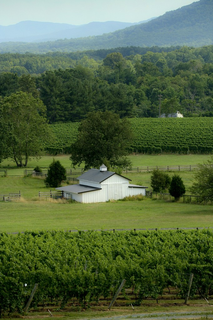 whitehall vineyard virginia mountain green barn