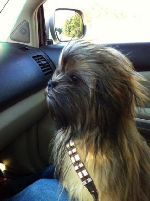 Most Epic Photos: the chewbacca dog