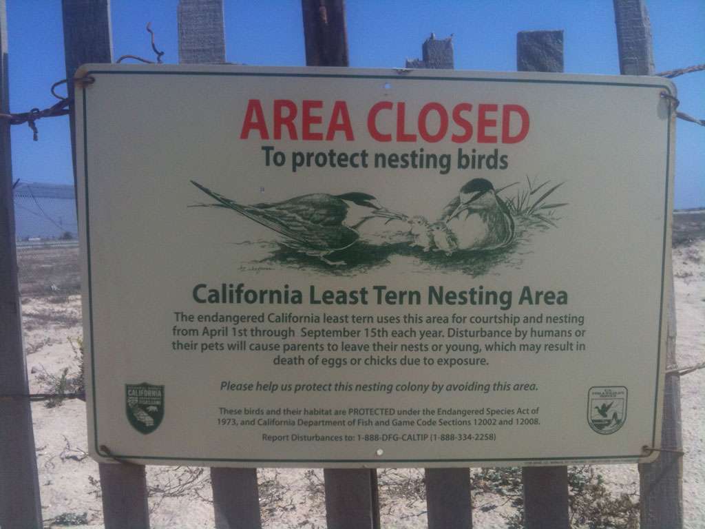 area closed protect nesting birds huntington beach california least terns natural preserve nature sign Walking with endangered species: California Least Tern