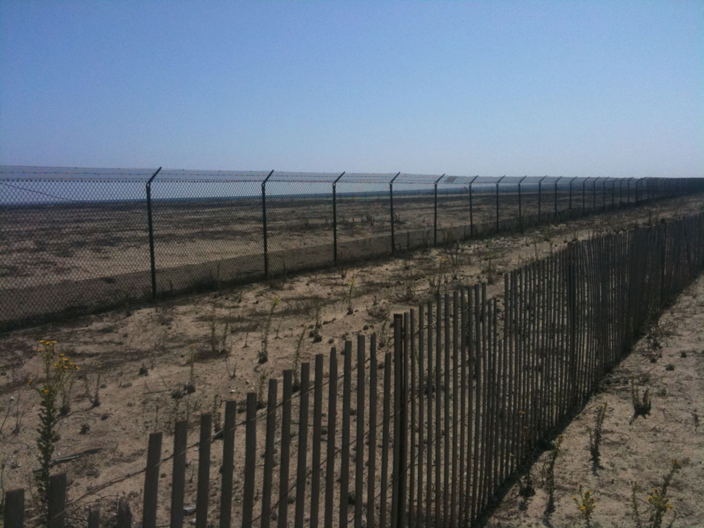 beach ocean fence picket natural nature preserve california least tern huntington beach Walking with endangered species: California Least Tern
