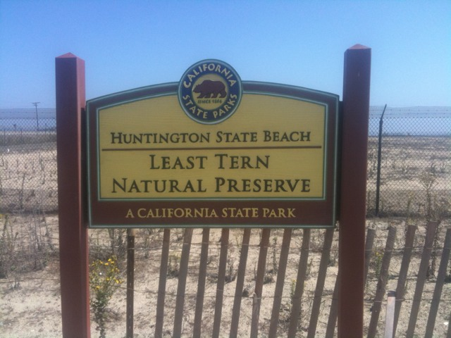 huntington state beach california least tern natural preserve nature park1 Walking with endangered species: California Least Tern