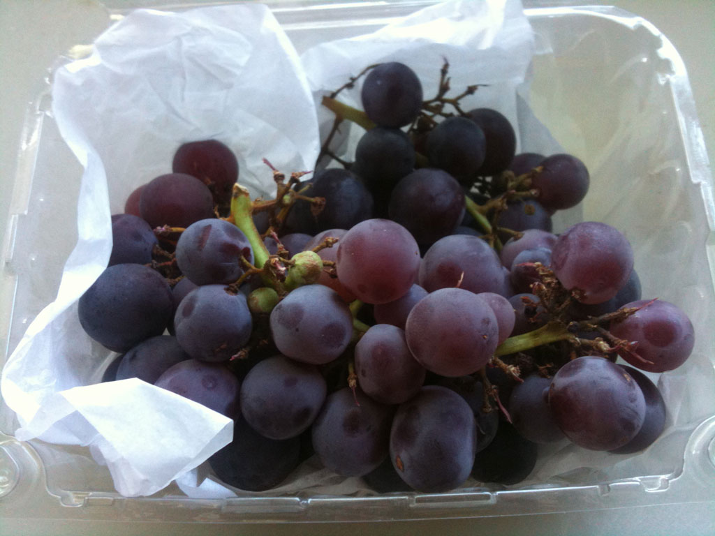 concord grapes purple fruit Im off supermarkets (and all farmers market) (13 pics)