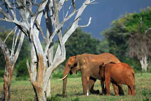 Elephants forage Tsavo east National Park The ultimate round up of Earth Day events for this Sunday