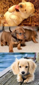cute puppies 139x300 cute puppies