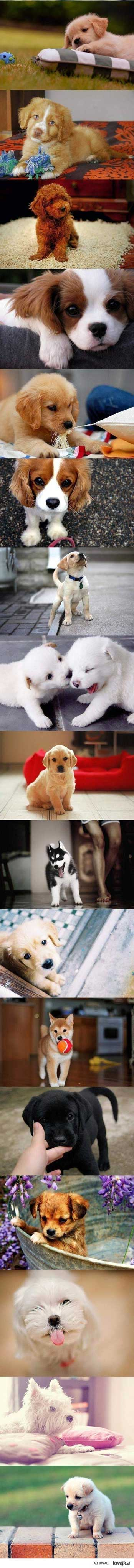 cute puppies film strip photos longest ever Cute puppies   the longest film strip ever, 42 puppies!