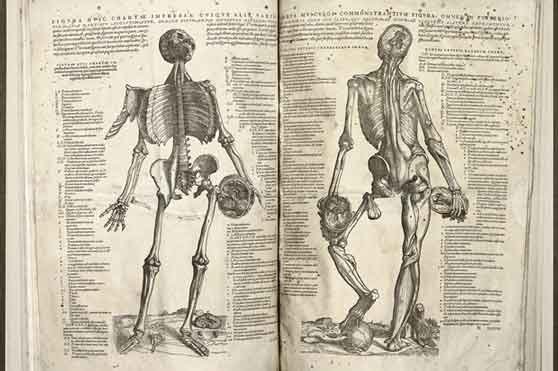 The Epitome 1953 by Andreas Vesalious anatomy human body skull muscles Rare drawings of human anatomy from centuries past