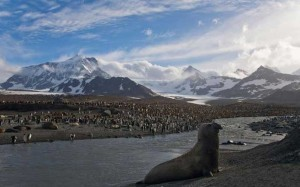 South Georgia in the The southern Atlantic Ocean rugged penguins elephant seals 300x187 South Georgia in the The southern Atlantic Ocean rugged penguins elephant seals
