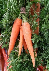 jumbo carrots on stalk green orange 207x300 jumbo carrots on stalk green orange