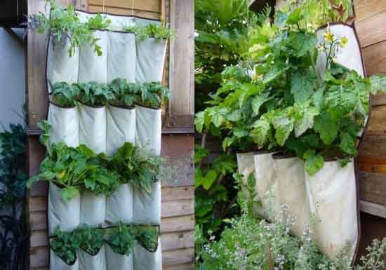 vertical gardens cloth hanging pot Stunning photos of vertical wall gardens