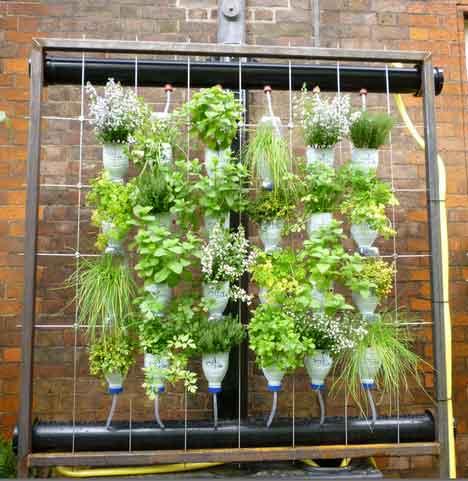 Stunning photos of vertical wall gardens 1X57